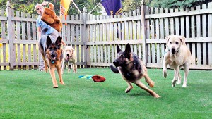 El césped artificial y los perros
